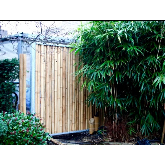 APUS bambuszrúd, 2000 x 50 -60 mm