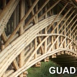Guadua bambuszrúd, 3000 x 120 - 140 mm