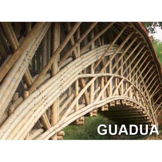 Guadua bambuszrúd, 6000 x 75 - 100 mm