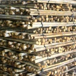 TAM VONG bambuszrúd, 2400 x 35-45 mm