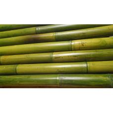 TONKIN zöldített bambuszrúd, 2000 x 40-45 mm