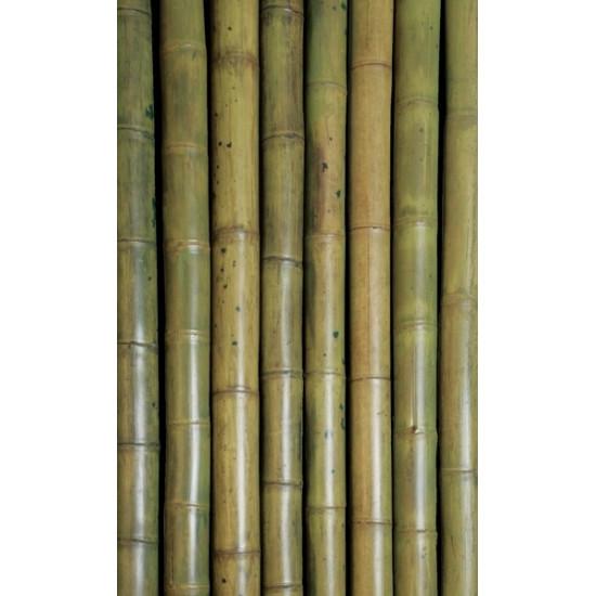 Guadua zöldített bambuszrúd, 3000 x 50-75 mm