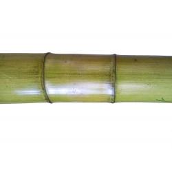 MOSO zöldített bambuszrúd, 3000 x 40-45 mm