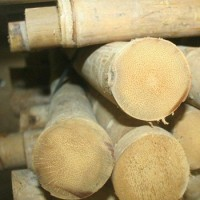 TAM VONG bambuszrúd