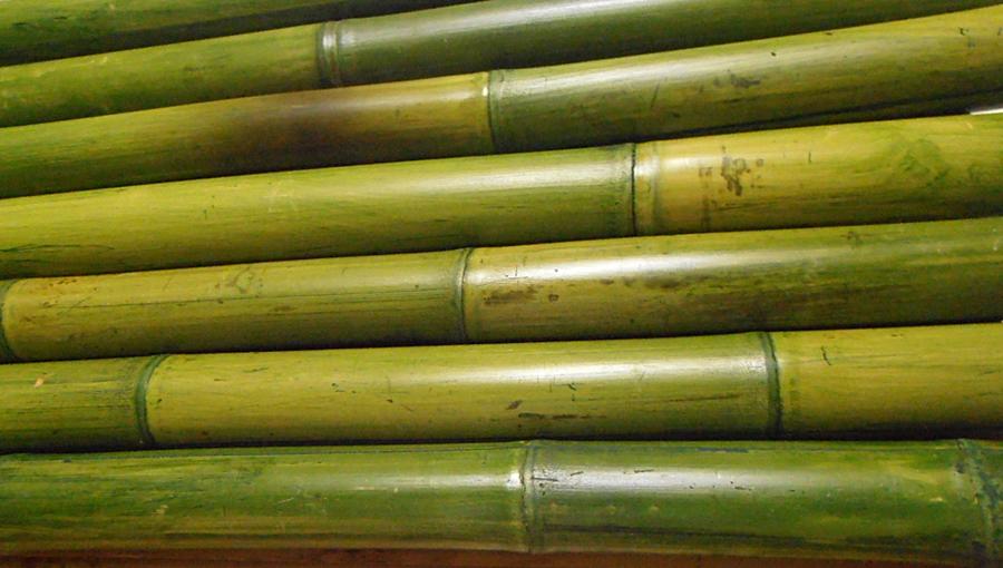 ZÖLDÍTETT bambuszrudak (3)