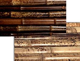 TIGRIS bambuszok (6)