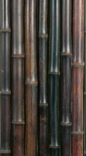 NIGRA bambuszrúd (6)